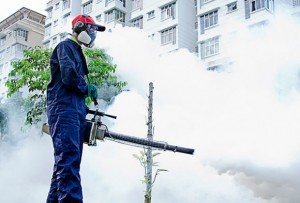 mosquito-pest-control-company-in-singapore